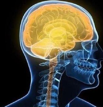 Waarom slimme mensen soms slechte managers zijn: het CEO brein
